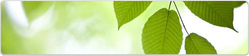 Ricoh Umweltschutz und Recycling
